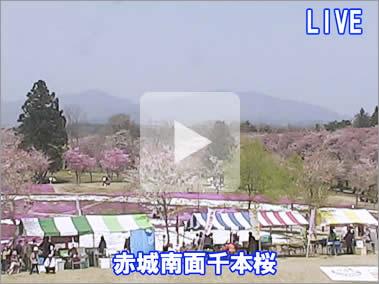 赤城南面千本桜 ライブカメラ画像