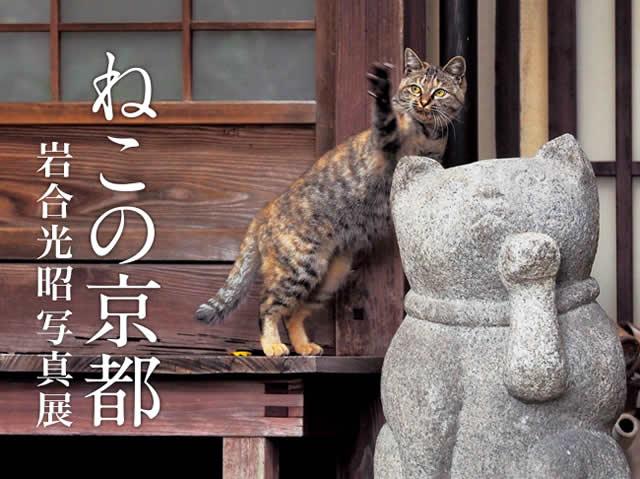 iwago-neko170503_01.jpg