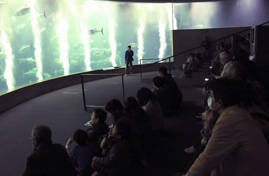kasai-aquarium-night02.jpg