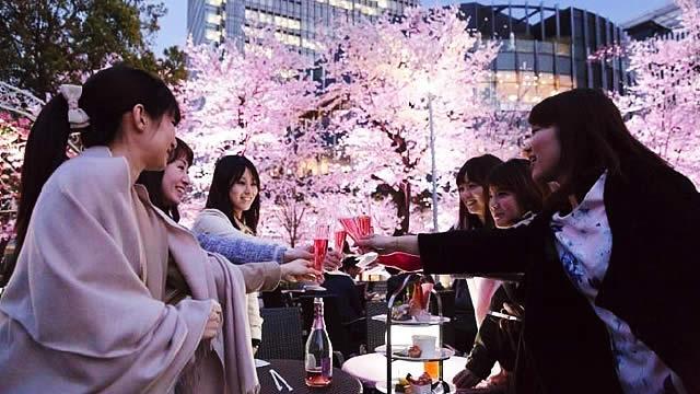 東京ミッドタウン桜カフェラウンジの画像