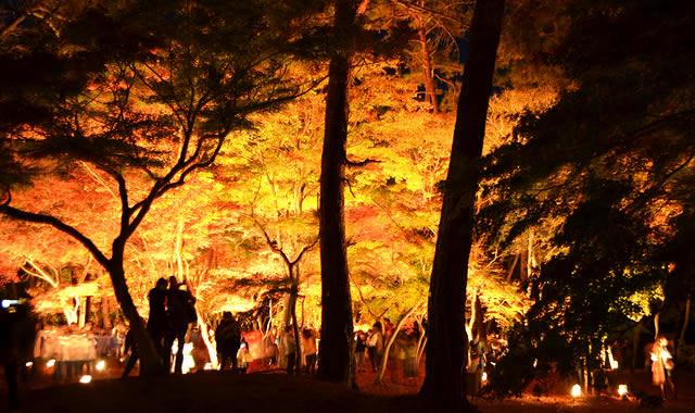 nagatoro-kouyou-lightup2016_02.jpg