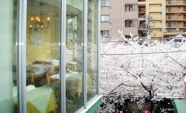 中目黒 桜 レストラン ティ・ピッキオ画像