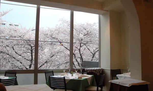 目黒川 桜 イタリアン リストランテ カシーナ カナミッラ画像
