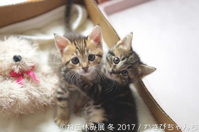 nekoyasumi201701_03.jpg
