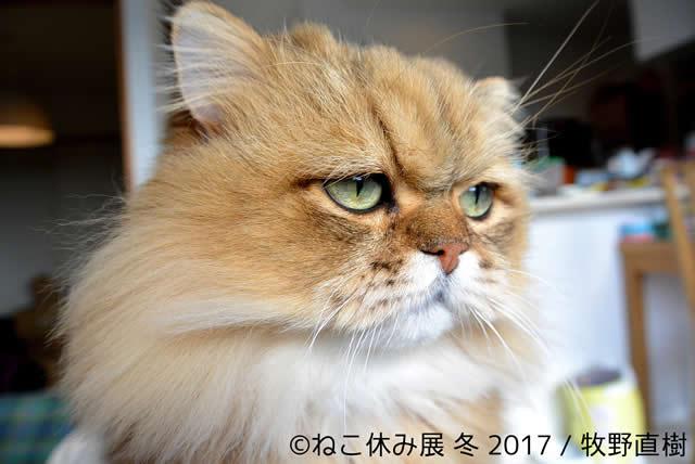 nekoyasumi201701_04.jpg