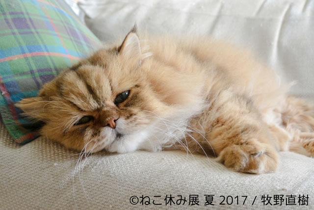 nekoyasumi201707_03.jpg