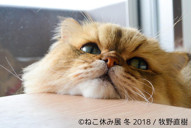 nekoyasumi201801_02.jpg