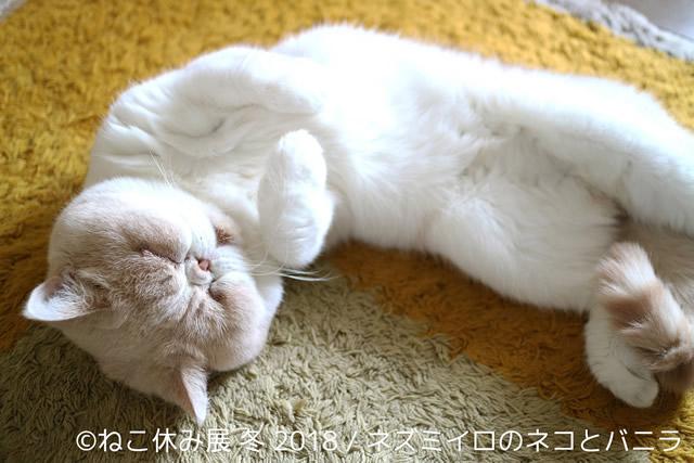 nekoyasumi201801_03.jpg