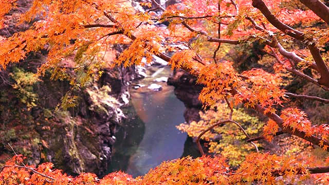 奥秩父大滝紅葉まつりの画像