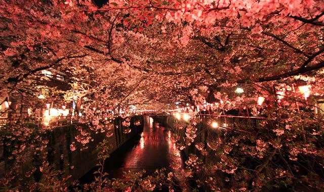 中目黒・目黒川桜ライトアップ画像