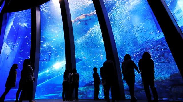 seaparadise-sardine-run01.jpg