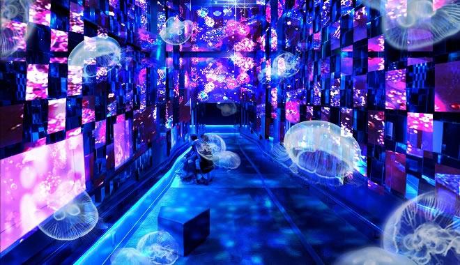 sumida-aquarium-kiyokawa01.jpg
