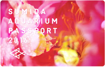 sumida-aquarium-ninamika2016_03.jpg