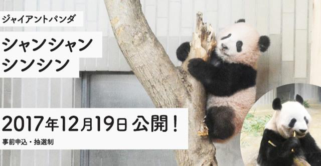 ueno-zoo-panda02.jpg