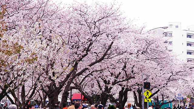 yokosuka-spring-fes01.jpg
