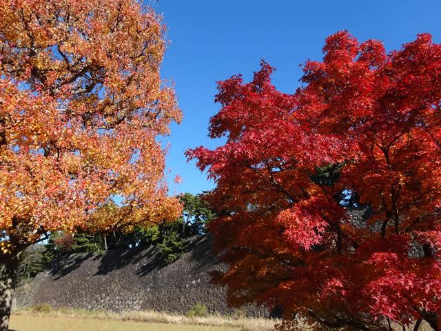 皇居乾通りの秋の一般公開の画像
