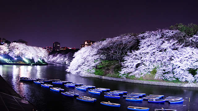 千代田のさくらまつりの画像