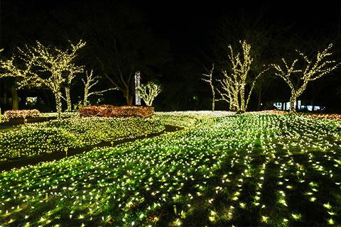 enoshima-illumi2016_04.jpg