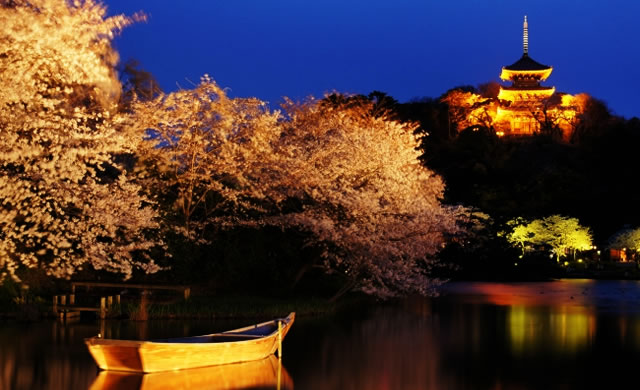 hanami-yokohama-sankeien01.jpg