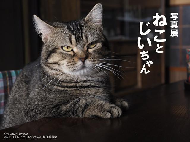 iwago-neko190109_01.jpg