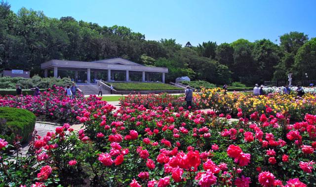 jindai-rose-festa01.jpg