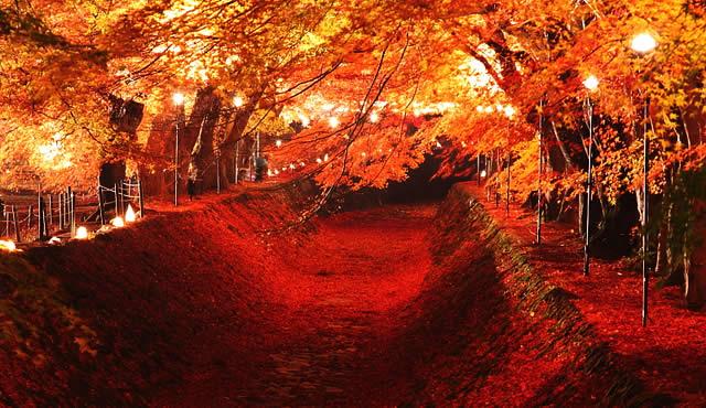 kawaguchiko-kouyou01.jpg