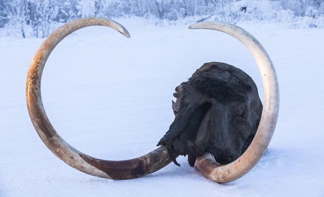 mammoth02.jpg