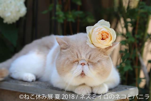 nekoyasumi201807_01.jpg