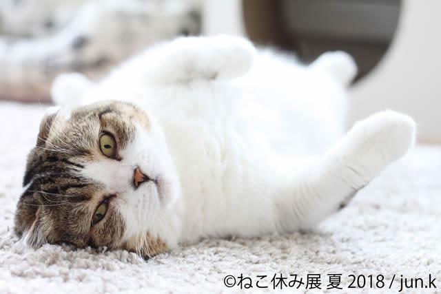 nekoyasumi201807_02.jpg