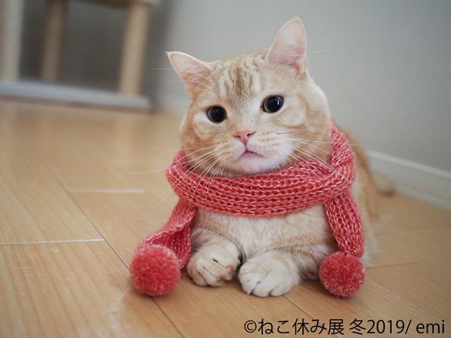 nekoyasumi201901_01.jpg