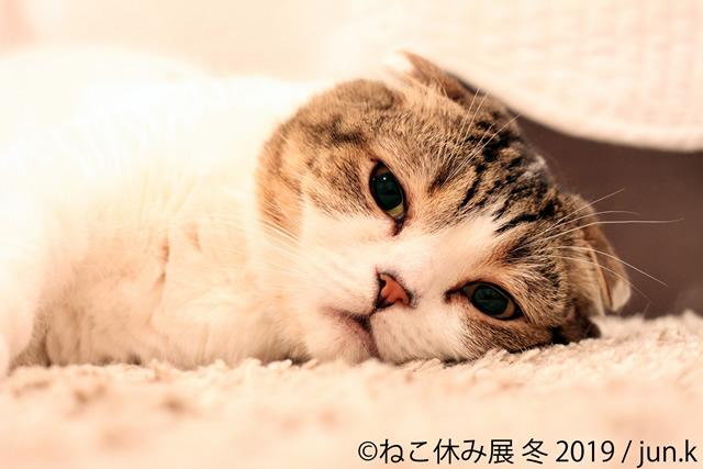 nekoyasumi201901_02.jpg