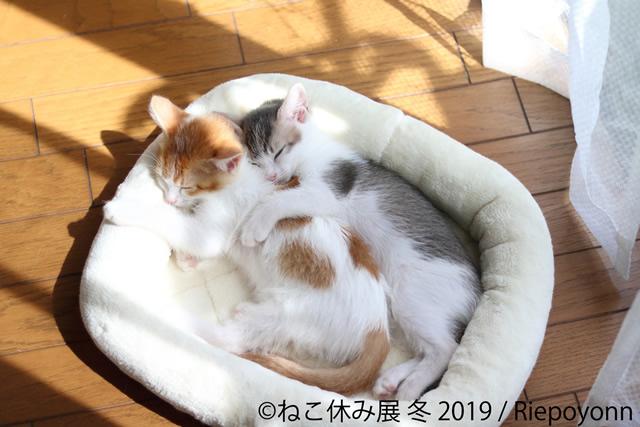 nekoyasumi201901_03.jpg