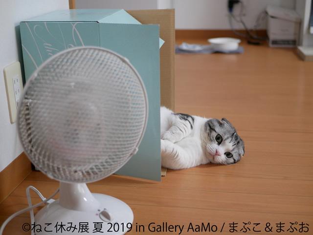 nekoyasumi201906_03.jpg