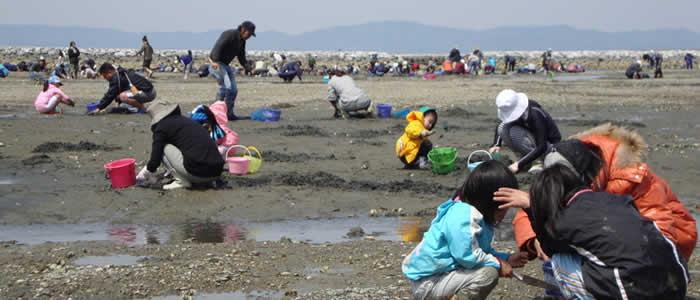 神奈川県潮干狩りスポットの画像
