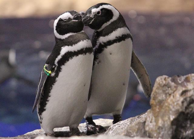 sumida-penguin201902_01.jpg