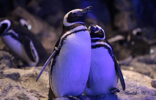sumida-penguin201902_02.jpg