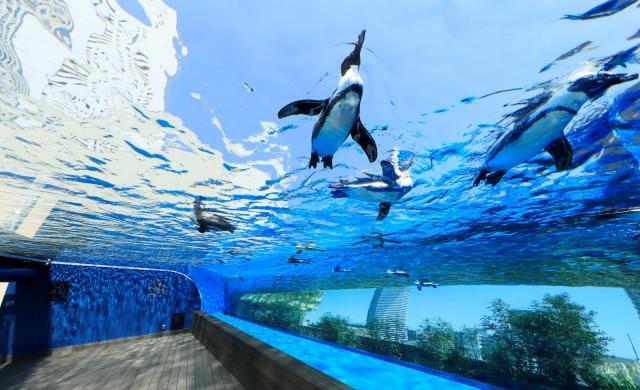 sunshine-aquarium-beergarden1807_01.jpg