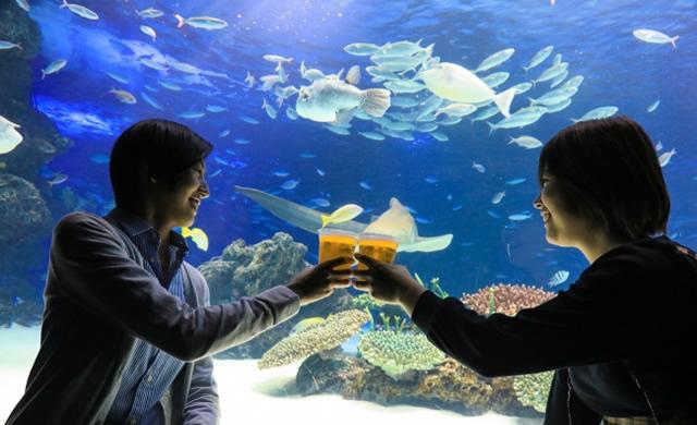 sunshine-aquarium-beergarden1807_02.jpg