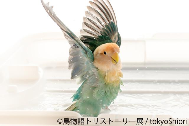 tori-story01.jpg