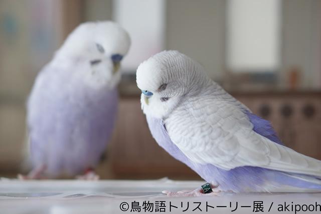 tori-story03.jpg