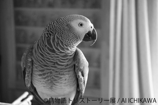 tori-story05.jpg