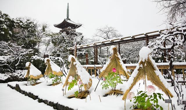 uenotoshogu-fuyu-botan2017_01.jpg