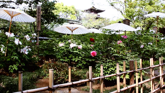 uenotoshogu-haru-botan01.jpg