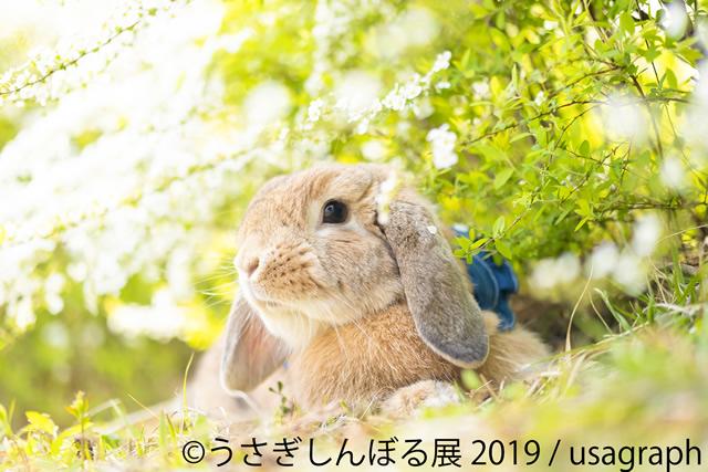 usagi-symbol1909_04.jpg