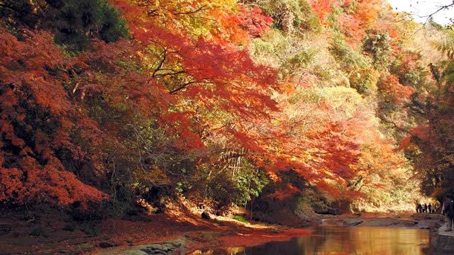 養老渓谷紅葉まつりの画像
